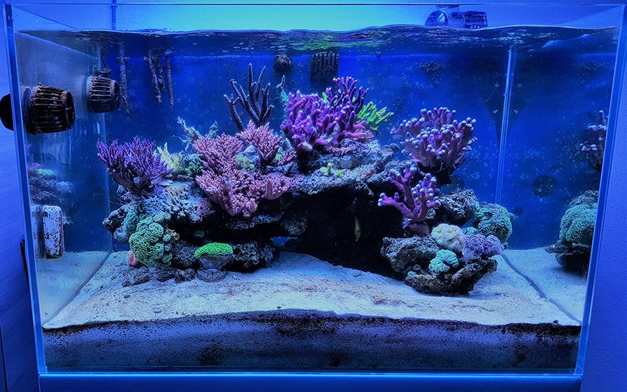 Photo of La lotta ai dinoflagellati nel mio acquario marino
