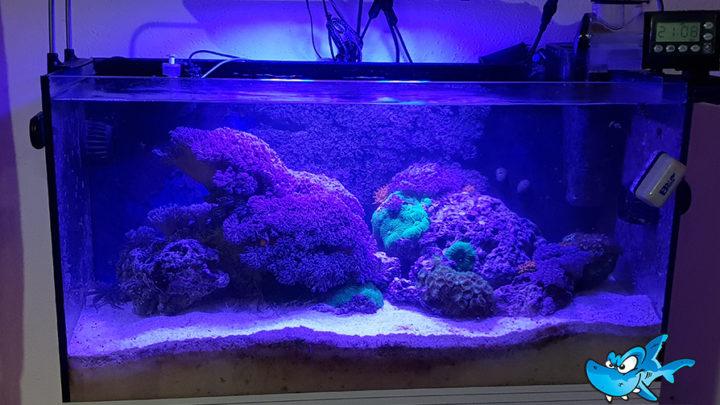 Il mio nanoreef prima parte u reef aquarium