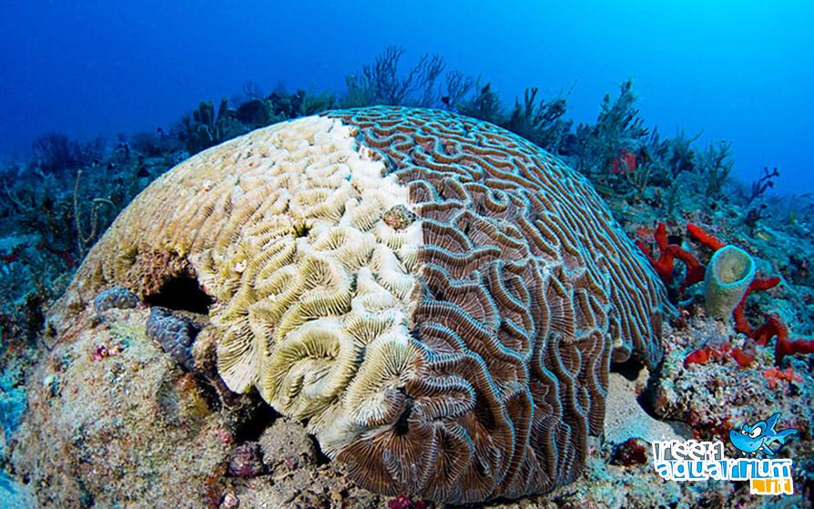 Gli scheletri bianchi dei coralli