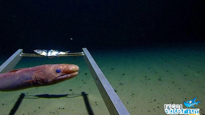Plastica nella Fossa delle Marianne