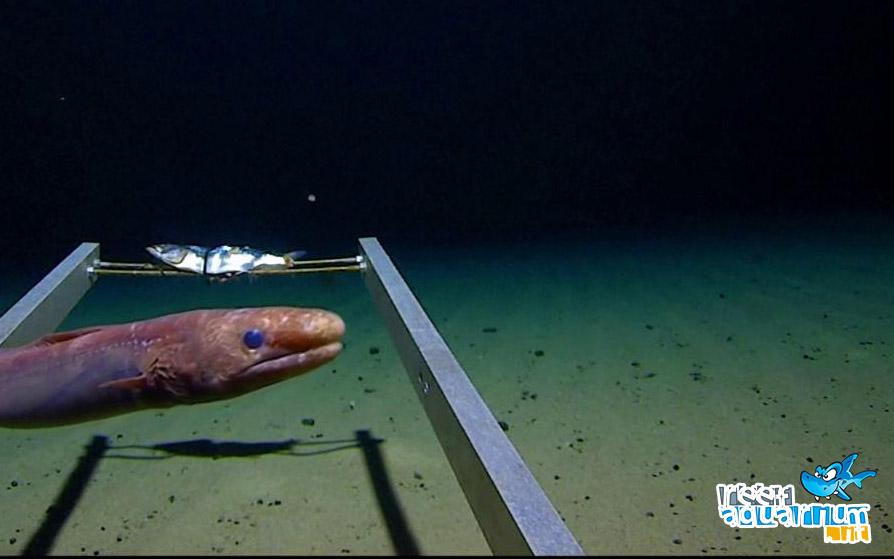 Photo of Plastica nella Fossa delle Marianne