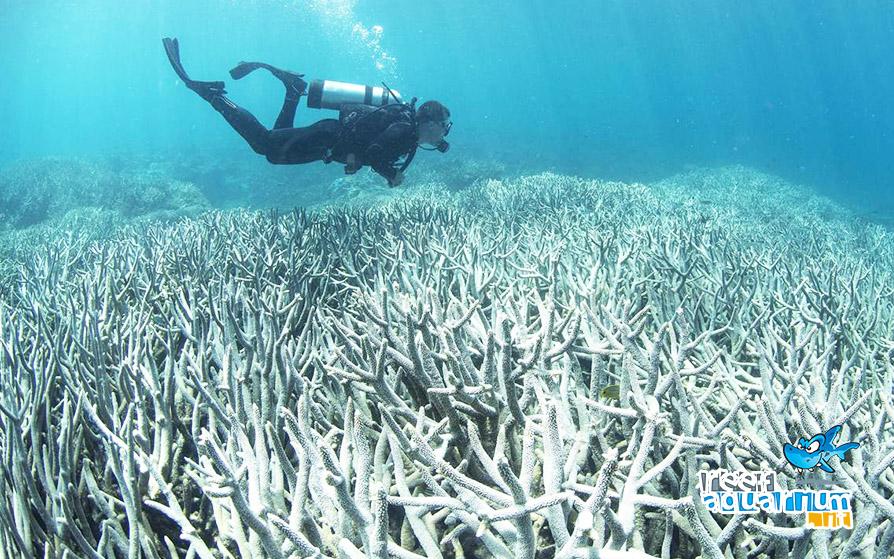 Il declino della Grande barriera corallina!