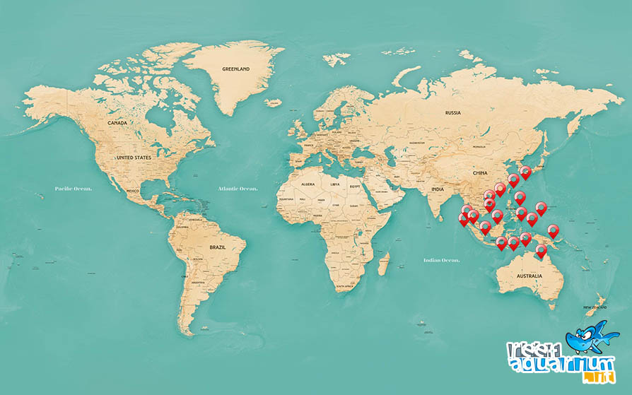 Areale biogeografico Amphiprion frenatus