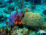 Messico, scoperte 5 barriere coralline