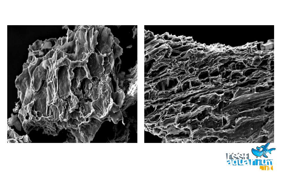 L'immagine al microscopio elettronico a scansione (SEM) del carbone attivo