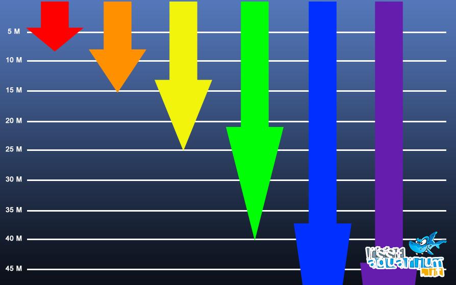 Le radiazioni con le lunghezze d'onda più ampie, sono quelle meno penetranti, iniziano ad attenuarsi intorno ai 5 metri. Se consideriamo le nostre vasche, dove l'altezza della colonna d'acqua può variare da 30 a 80 cm, risulta evidente che l'assorbimento della radiazione luminosa è del tutto trascurabile